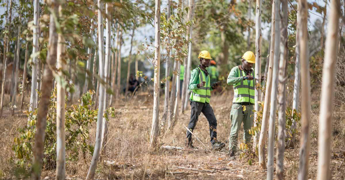 Apple объявляет о создании инвестиционного фонда в размере 200 миллионов долларов для проектов восстановления лесов